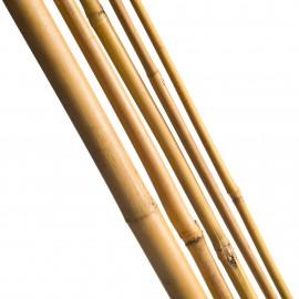 3 Tuteurs H180cm en bambou
