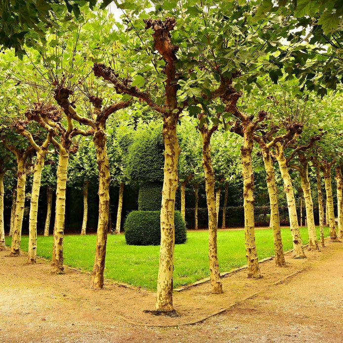 Contre les racines d'arbres