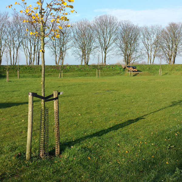 Protection pour les arbres